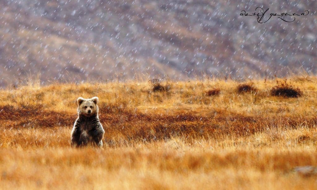 Deosai: The Land Of Gaints